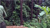 Một đôi nam nữ thương vong vì xe máy mất phanh lao xuống vực sâu gần 100m ở Tam Đảo