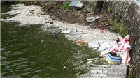 Hồ Tây: Cá chết trắng mặt hồ, bốc mùi hôi thối