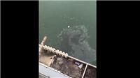 Trung Quốc: Nhiều người mất tích trong vụ tai nạn trên cầu bắc qua sông Dương Tử