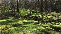 Khu văn hóa thổ dân Budj Bim của Australia được công nhận là di sản thế giới