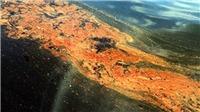 Brazil phát hiện các vệt dầu loang tới 'thánh địa' của cá voi lưng gù