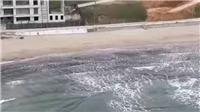 Romania điều tra vụ hơn 130 kg cocaine trôi dạt ngoài biển