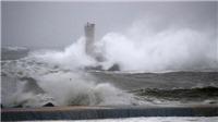 Siêu bão Hagibis: Tàu hàng Panama chìm ở vịnh Tokyo, chưa rõ số phận 2 thủy thủ Việt Nam