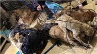 Thanh Hóa: Bắt giữ và triệu tập trên 30 nghi phạm trong đường dây trộm hàng trăm tấn chó