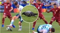 Tiền vệ De Paul của tuyển Argentina gây sốt khi bị... chim bồ câu đốn ngã trên sân