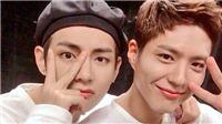 Park Bo Gum bỗng nổi danh toàn cầu với tư cách là… fan bự nhất của V BTS