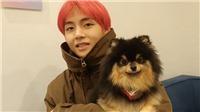Fan phát hiện V BTS có khả năng đặc biệt giống chú cún Yeontan của anh