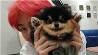Cún cưng của V BTS còn nổi tiếng hơn hầu hết thần tượng kpop