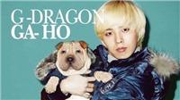 Thú cưng của G-Dragon Bigbang bị gia đình bỏ bê, ngược đãi