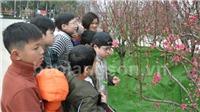 Lần đầu tiên tổ chức Lễ hội Hoa đào Xứ Lạng