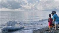 Hoang mang với xác sinh vật kỳ dị chưa từng thấy dạt vào bờ biển Philippines