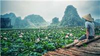 Xuất hiện đầm sen nở rộ giữa Thu ở Ninh Bình