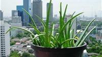 Dịch COVID-19: Ở nhà trồng cây, may vá, nấu ăn…