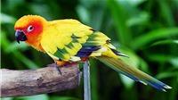 Truyện cười: Con chim vui tính