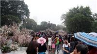 Hoa hậu hoa Anh Đào đến Hà Nội dự Lễ hội hoa anh đào 2018