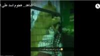 VIDEO: Sư tử ngoạm đầu bé gái chơi trò cảm giác mạnh trong chuồng thú