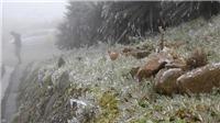 Nhiệt độ xuống mức âm, đỉnh Mẫu Sơn xuất hiện băng giá