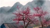 Dự báo thời tiết ngày 3/1: Bão số 1 đang mạnh lên, Hà Nội rét đậm, chiều và đêm có mưa
