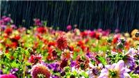 Miền Bắc mưa dông, sông Hồng xuất hiện lũ, Nam bộ ngày nắng nóng