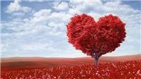 Ảnh bìa Facebook chào đón ngày đặc biệt Lễ Tình nhân Valentine 2019
