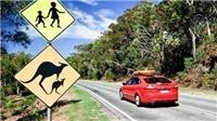 'Choáng' với nhóm trộm nhí đánh cắp và tự lái xe ô tô hàng nghìn km
