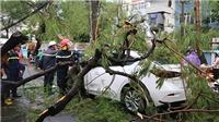 Dự báo thời tiết: Bão số 4 suy yếu thành áp thấp nhiệt đới, cả nước có mưa