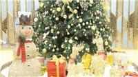Thắp sáng cây thông Noel khởi động mùa lễ hội