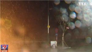 VIDEO: Hàng loạt cây bật gốc khi bão số 2 đổ bộ Sầm Sơn