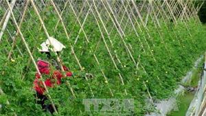 Bắc Giang đầu tư hơn 1.500 tỷ đồng quy hoạch vùng nông nghiệp công nghệ cao