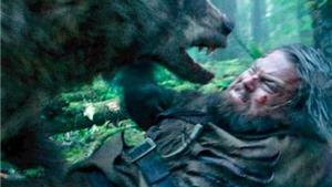 Diễn viên đóng con gấu trong 'The Revenant': 'Lăn lộn với Leo không dễ chịu lắm đâu'