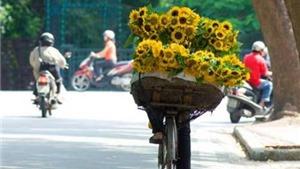 Hà Nội: Ít mây, ngày nắng, đêm không mưa
