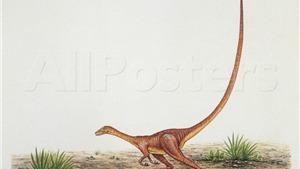 Mẩu đuôi khủng long từ 99 triệu năm trước còn nguyên vẹn trong miếng hổ phách