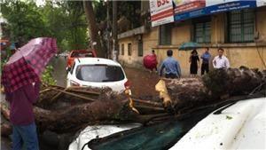 Hà Nội: Mưa to, cây đổ đè bẹp xe ô tô trên phố