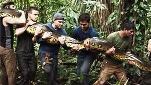 Discovery gây sốc với kế hoạch chiếu cảnh rắn khổng lồ Nam Mỹ ăn thịt người