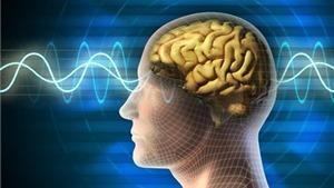 Biết nhiều ngôn ngữ giúp não bộ nhanh nhạy hơn