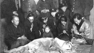Chú chó huyền thoại Hachiko: Ăn đòn rồi được phong thánh
