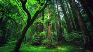 Rừng Amazon giảm khả năng hấp thụ khí CO2