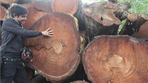 'Mục sở thị' kho tập kết gỗ được chặt hạ trên các tuyến phố Hà Nội