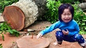 Đổ lỗi cho... cây