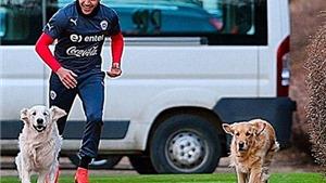 Alexis Sanchez cho chó đi dạo ở... sân tập của Arsenal