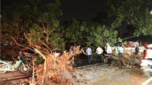 Tổng thiệt hại do dông lốc: 2 người chết, 1.350 cây xanh bị đổ, 25 ô tô bị hư hại...