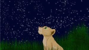 Đừng quên những bầu trời sao