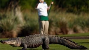 VIDEO: 10 sự cố hài hước ở các giải golf PGA Tour