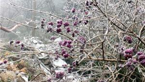 Băng tuyết phủ trắng rừng Phja Oắc: Du khách thì mừng, người dân thì lo