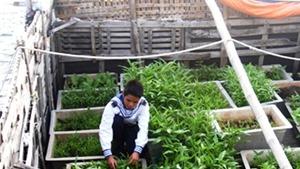 Ký sự Đến với Tết Trường Sa: Nhà giàn rau xanh 'độc nhất vô nhị' ở đảo Đá Đông