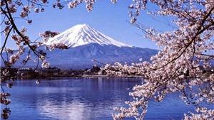 Tour Osaka-Kyoto-Núi Phú Sĩ-Tokyo-Odaiba: Nhật Bản rực rỡ mùa hoa anh đào