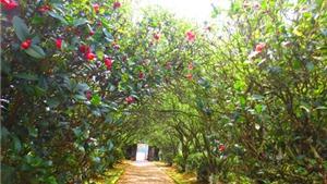 Ngắm những ngôi nhà vườn trứ danh xứ Huế