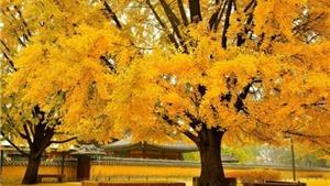 Câu chuyện du lịch: Khám phá Thu vàng Busan