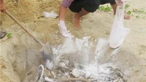 Hà Tĩnh sẽ tiêu hủy gần 12 tấn hải sản không an toàn