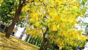 Chiang Mai mùa hoa